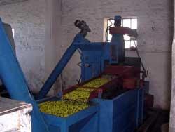Olivenreinigung